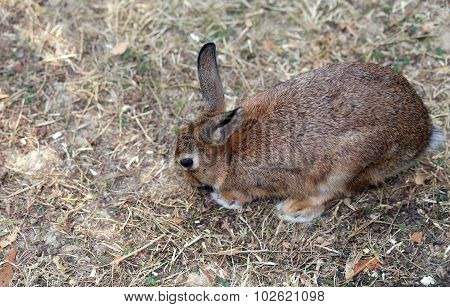 Rabbit With Long Ears And A Shiny Coat