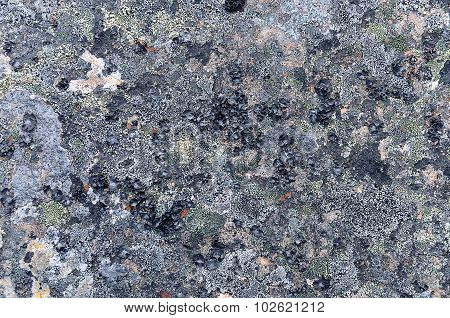 Rock Surface Covered With Lichens