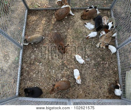 Metal Cage With Many Rabbits