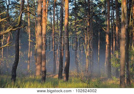 KIEV, UKRAINE - September 03, 2015: Smoke from forest fires near Kiev