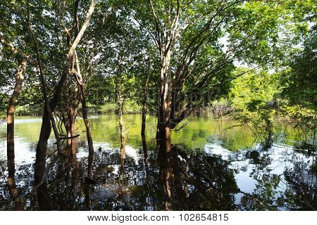 Amazon wetlands in Brazil