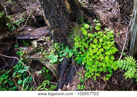 Rotten tree with many green plants