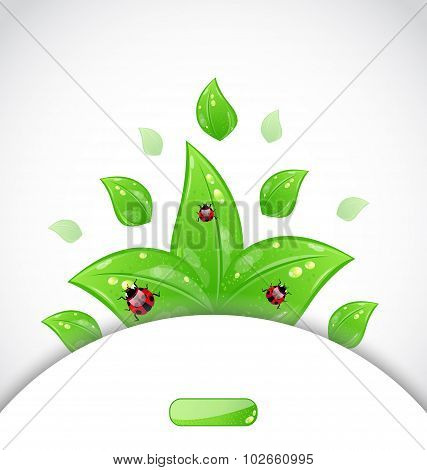 business brochure template with green leaves and ladybugs