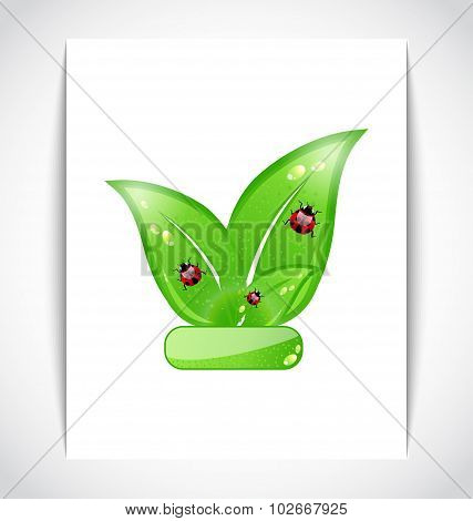 Green eco leaves with ladybugs on the white paper