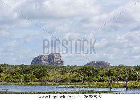Yala National Park Landscape