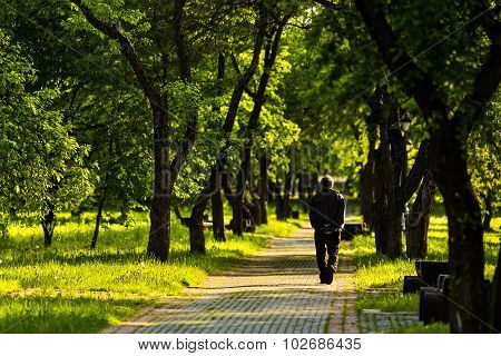 Lonely man goes away on road among trees