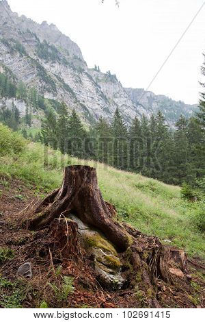 Deforestation Concept With A Tree Stump In A Green Forest