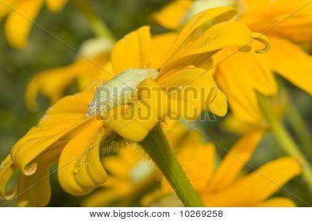 Garden Gold