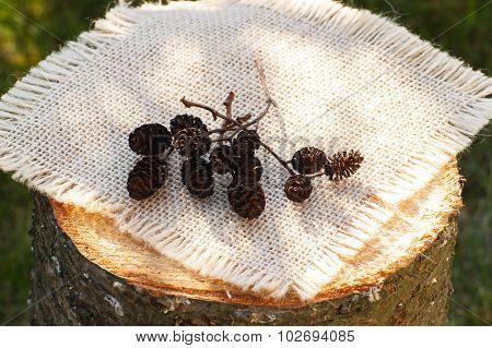 Autumnal Alder Cone On Wooden Stump In Garden