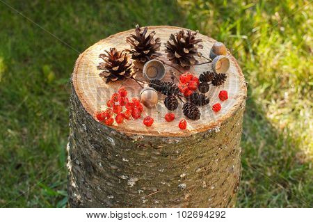 Autumn Fruits Of Forest On Wooden Stump In Garden