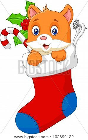 Cartoon animal cat in the sock christmas
