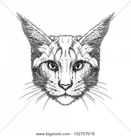 Hand Drawn stylized portrait of cat face