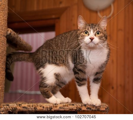 Grey Tabby Cat And Kittens Standing On Scratching Post