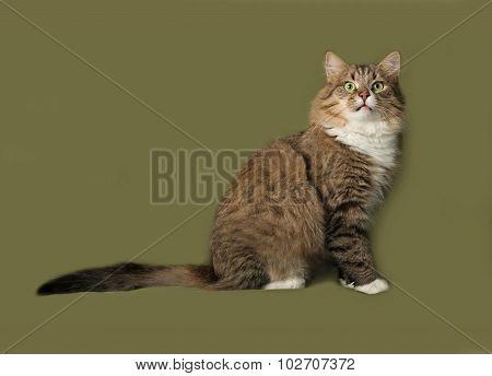 Striped Fluffy Siberian Cat Sitting On Green