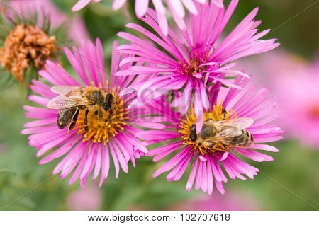 bee color