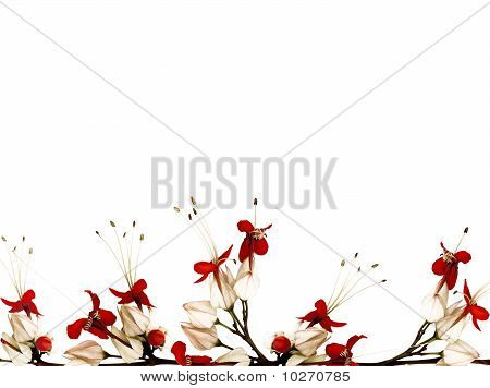 Red Black And White Butterfly Flower Border Isolated With Clipping Path