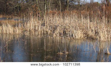 sear reed