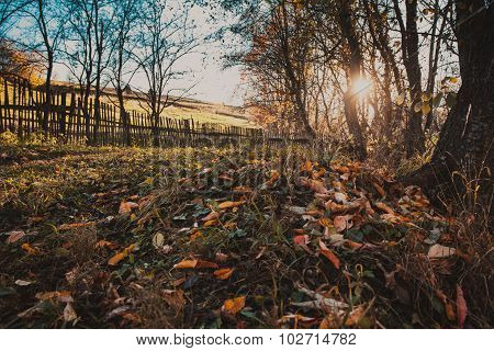 Autumn nature
