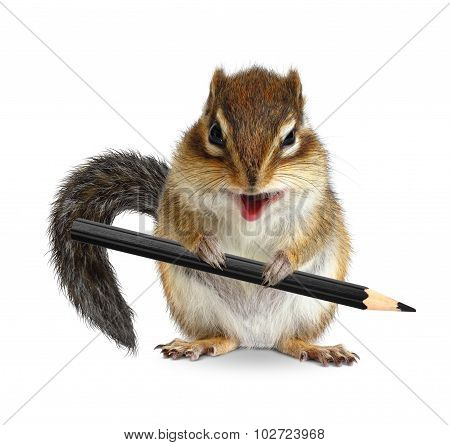 Funny Chipmunk Hold Pencil, Isolated On White