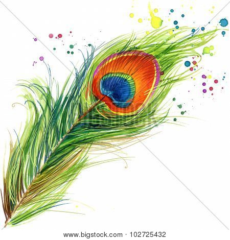 Exotic peacock feather T-shirt graphics. peacock illustration with splash watercolor textured backgr