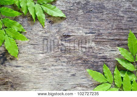 Green Leaves Backdrop