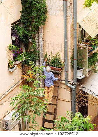 Odessa, August 21: Old White-haired Man Standing On A Wooden Staircase, Takes Care Of The Flowers. A