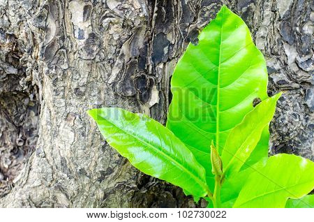 Green Leaves And Tree Bark Background