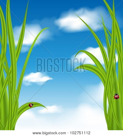 Nature background with green grass and ladybug
