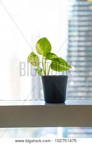 A small plant placed in a black pot which displayed in the window against blur skyline.