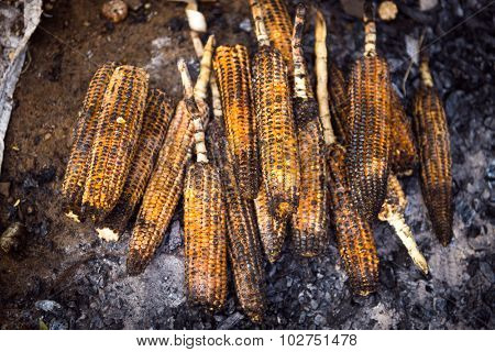 Organic, fresh corn cobs are roasted on a coal on roadside farmers stall. View from top.