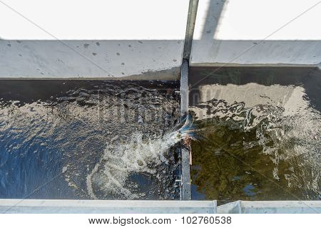 Seahurst Beach Salmon Ladder 2