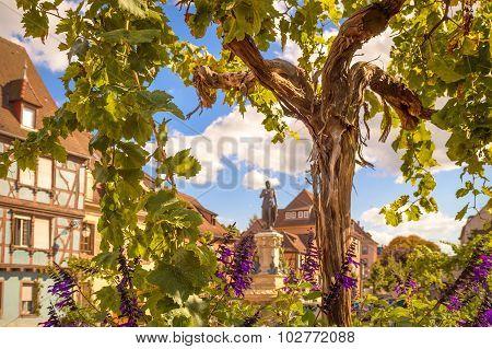 Decorative Vine On The Public Square