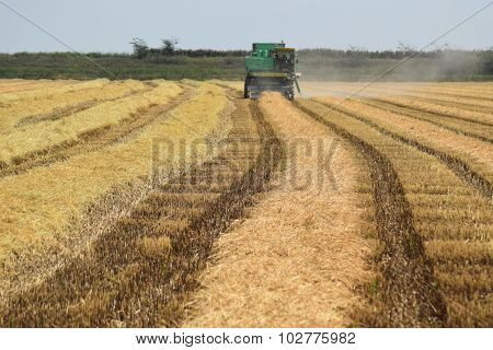 Rice Harvesting By The Combine