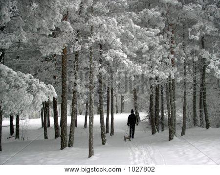 Winter Idila