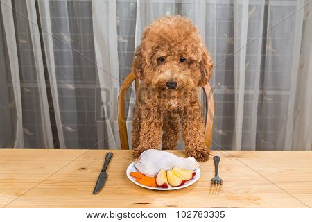 Concept Of Excited Dog Having Delicious Raw Meat Meal On Table.