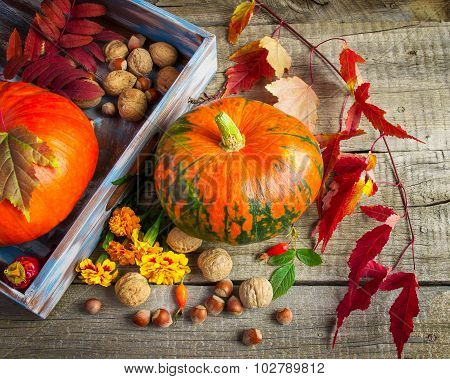 Pumpkins, Marigolds, Purple Leaves And Nuts On An Old Wooden Bac