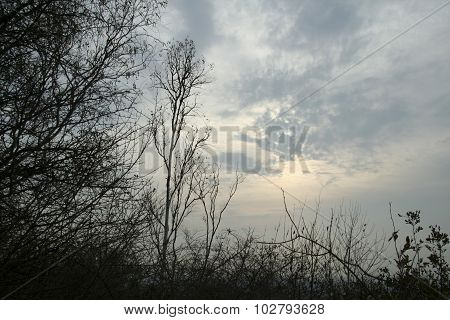 Morning Cloudy Sky In A Forest Area