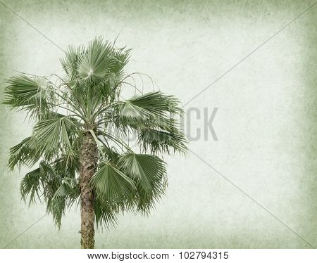 palm leaf with old paper background