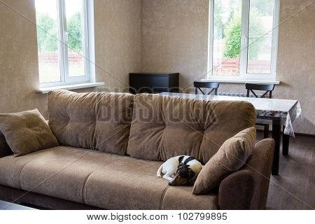 Dog Sleeps On Couch In The Living Room Of A Country House