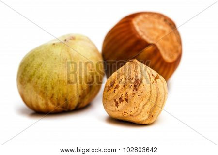 Hazelnut Kernel Isolated