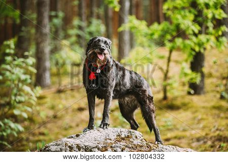 Happy Smiling Small Size Black Hunting Dog in Summer Forest