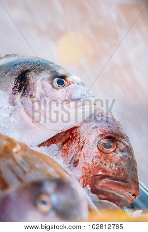 Fresh fish on ice on market store shop. Dorado fish on ice - hea