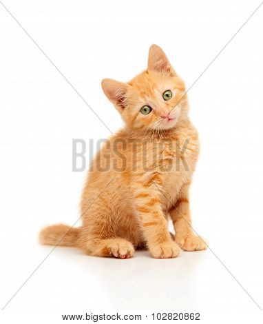 Cute little red kitten sitting and looking straight at camera