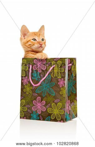 Seriously glamorous little red kitten sitting in flowered green pink and blue shopping bag