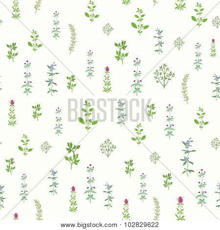 Spice Herbs Seamless Background