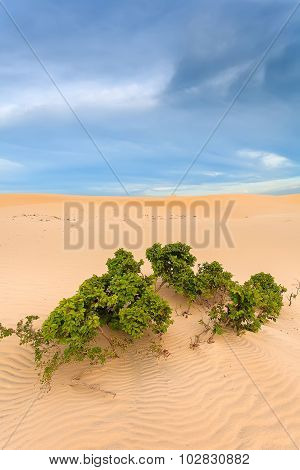 The Wilderness Of Sand And Bush Tree