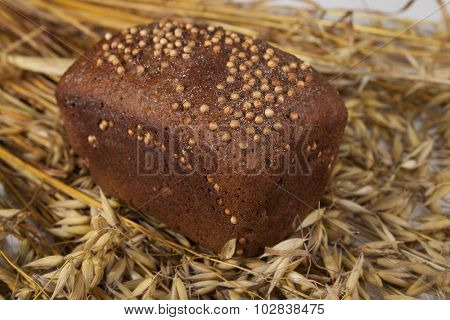 Loaf of homemade bread with black mustard seeds on table with rye spikelets  and oats.