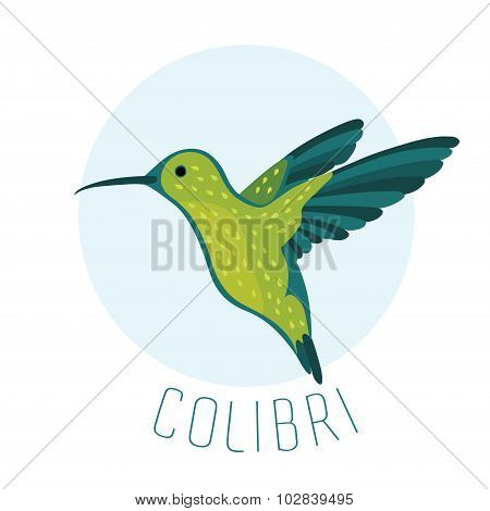 The image of Colibri Hummingbird