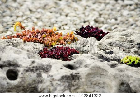 Autumn Stone Gardening