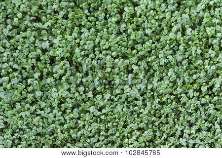 Green Grass Background Texture Photo